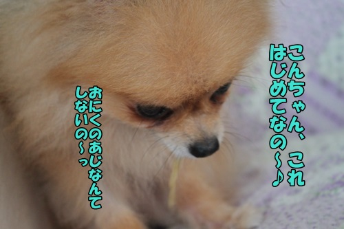 IMG_7694.jpg