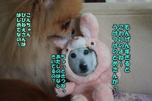 IMG_7740.jpg