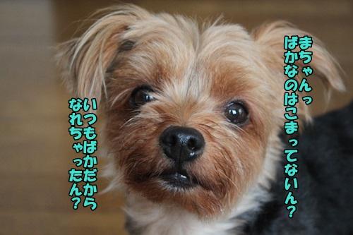 IMG_7836_2014082111002666b.jpg