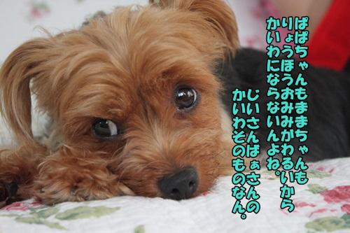 IMG_7841_20140821111306988.jpg