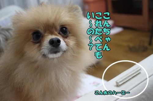 IMG_7909_20140823203933eda.jpg