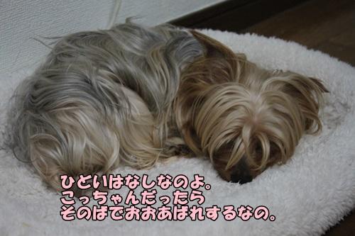 IMG_8007_201408281946344e6.jpg