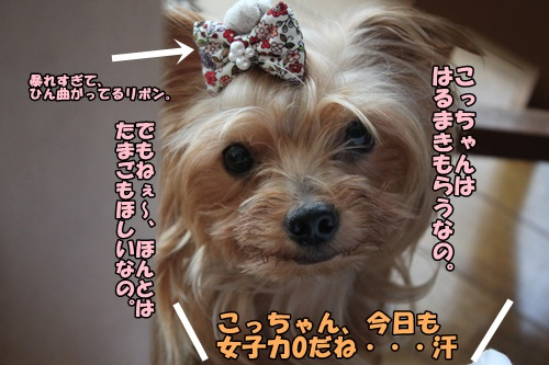 IMG_8079_2014090212584192c.jpg