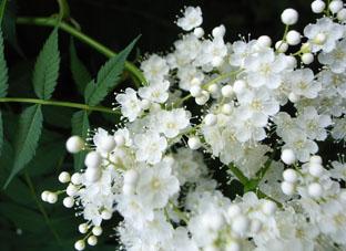 渋谷の花1