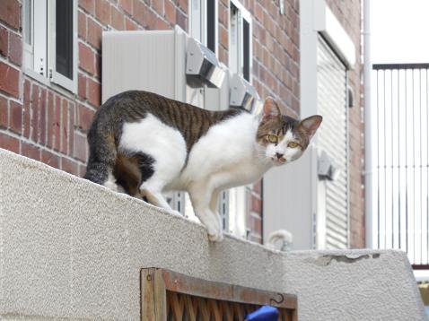 通りすがりに見かけた猫(733)