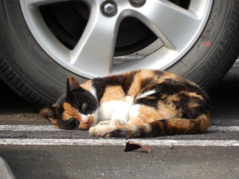 通りすがりに見かけた猫(734)