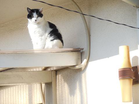 通りすがりに見かけた猫(735)