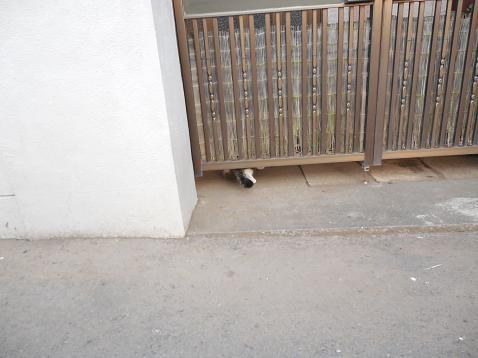 通りすがりに見かけた猫(736)
