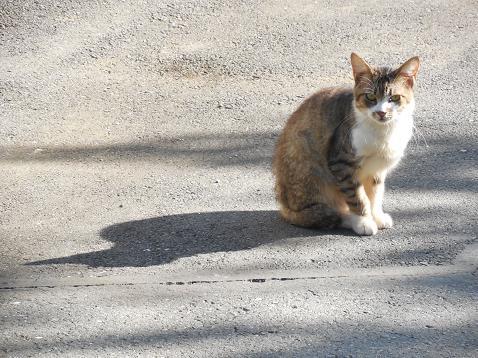 通りすがりに見かけた猫(737)
