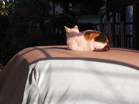 通りすがりに見かけた猫(739)