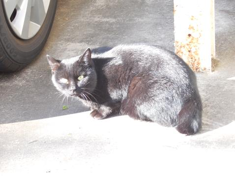 通りすがりに見かけた猫(740)