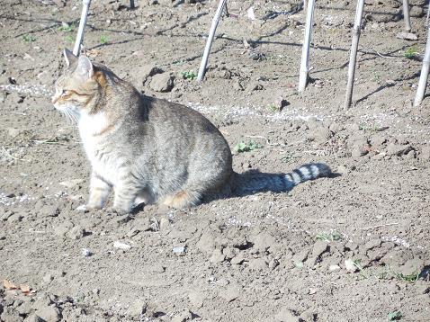 通りすがりに見かけた猫(741)