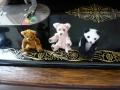 ナンフェア モールベアと羊毛フェルトのパンダ