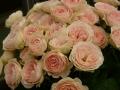 国際バラとガーデニングショウ 2014