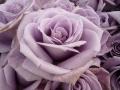 ナンフェア 国際バラとガーデニングショウ2014
