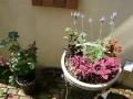 ナンフェア 初夏の寄せ植えとバラ