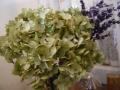 ナンフェア 紫陽花 アナベル