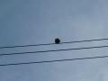 ナンフェア 電線でくつろぐ鳩