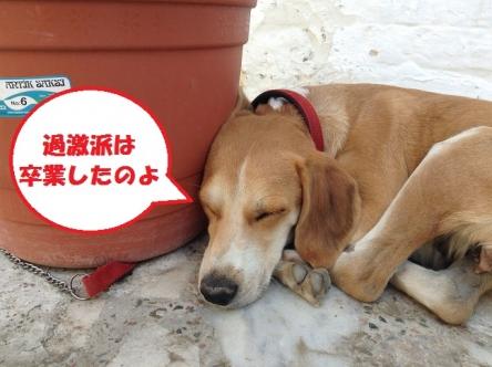 足長ジューコちゃんお昼寝タイム