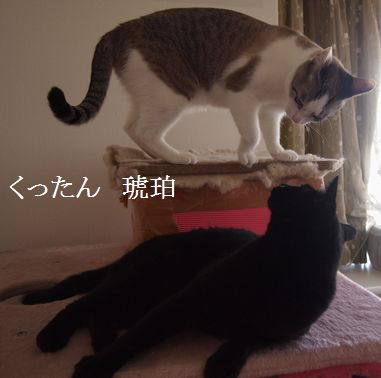 kurokohaku1_20140608175758390.jpg