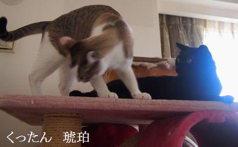kurokohaku_201406081757570ab.jpg