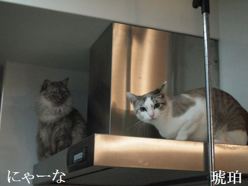nya-nakohaku_201403161653490e3.jpg