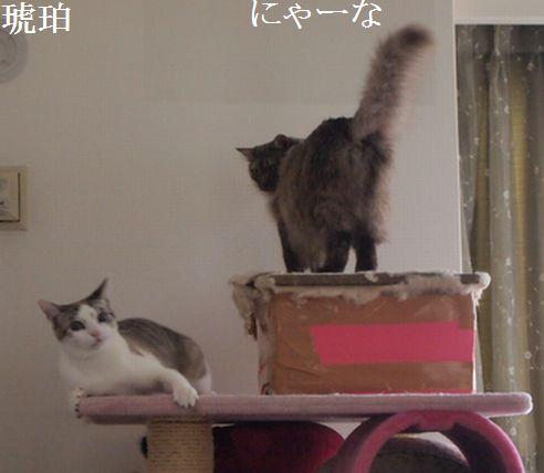 nya-nakohaku_20140330115931aeb.jpg