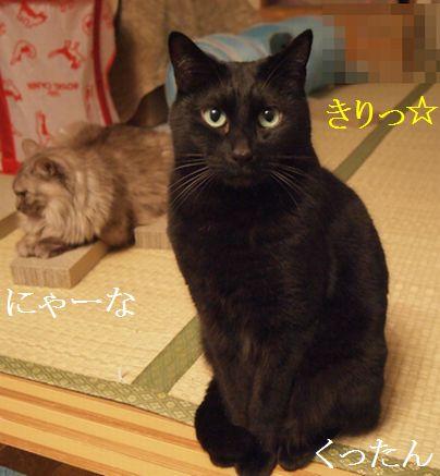 nya-nakuro1.jpg