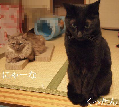 nya-nakuro_20140302165437a98.jpg