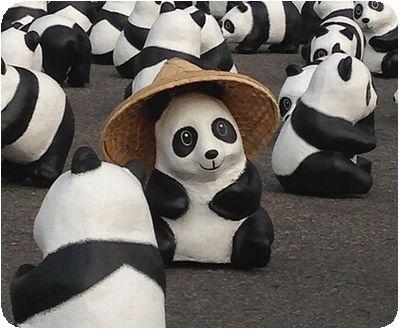 1600貓熊世界之旅かさ