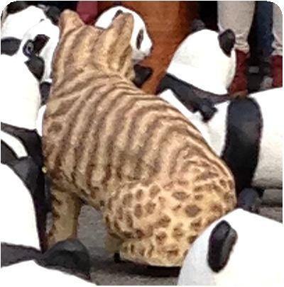1600貓熊世界之旅ピューマ