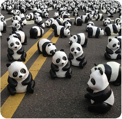 1600貓熊世界之旅近く