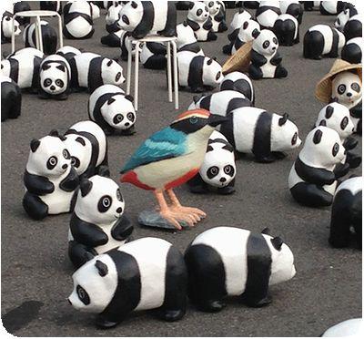1600貓熊世界之旅鳥