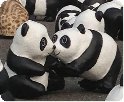 1600貓熊世界之旅鼻チュー