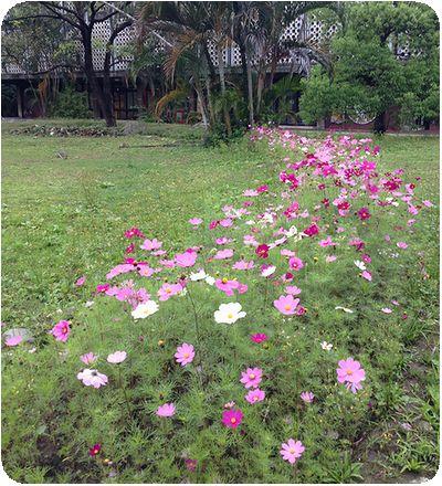 台湾大学コスモス