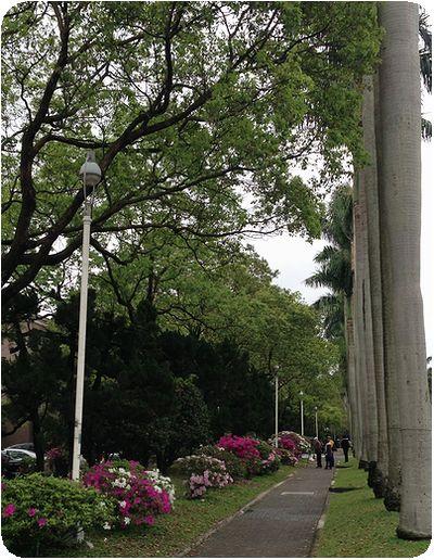 台湾大学ヤシ側道