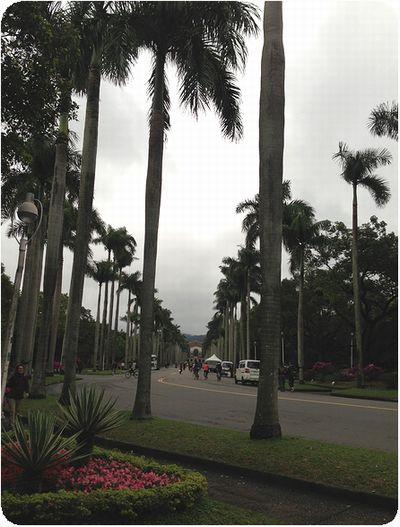 台湾大学ヤシの木