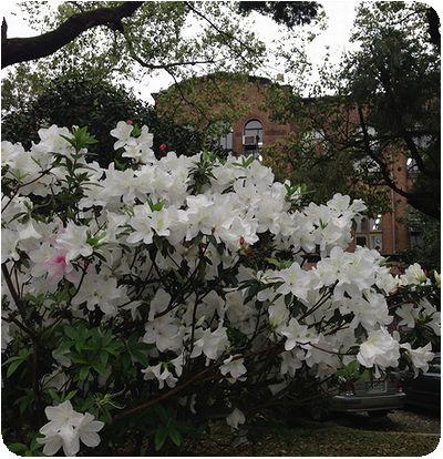 台湾大学洋館と白つつじ