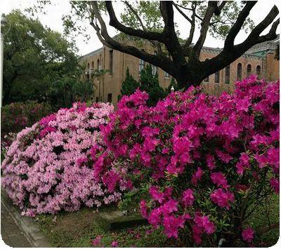 台湾大学大きい