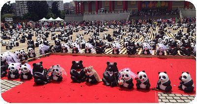 1600猫熊世界之旅結婚式