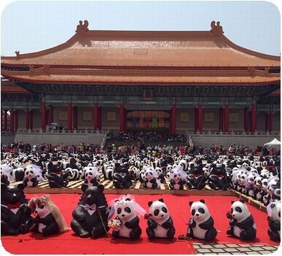 1600猫熊世界之旅国家戯劇院