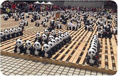 1600猫熊世界之旅数字