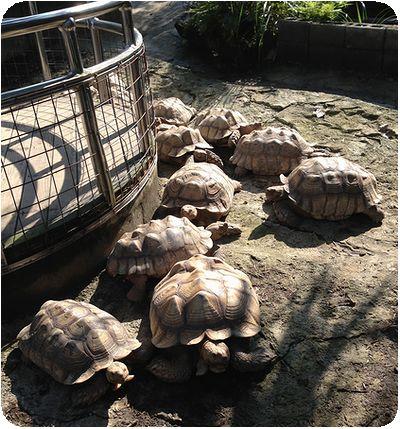 台北市立動物園カメ