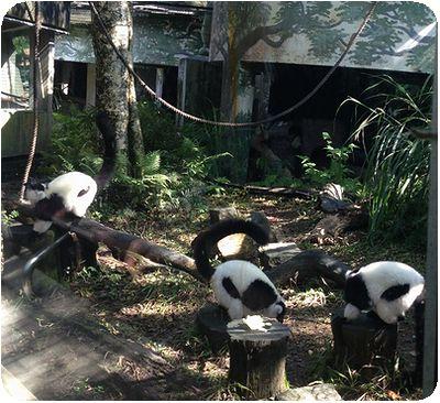 台北市立動物園さるいっぱい