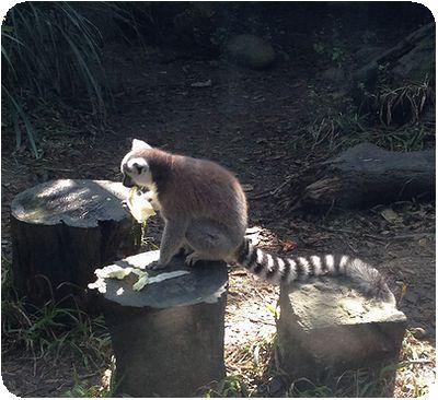 台北市立動物園さるしま