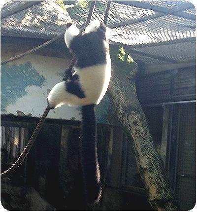 台北市立動物園さるつかまる