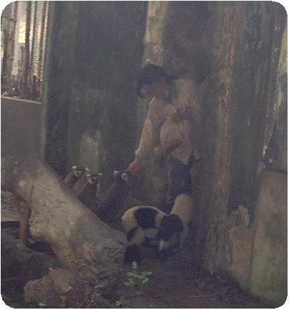 台北市立動物園さる餌付け