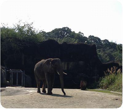 台北市立動物園ゾウ
