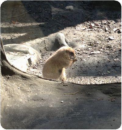 台北市立動物園ネズミ