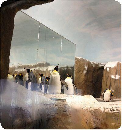 台北市立動物園ペンギン